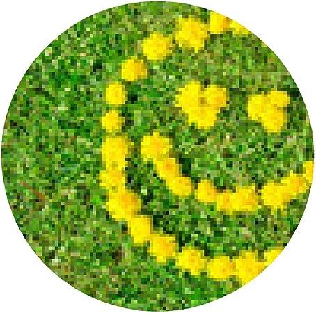Smileys blumen eyefortransport.com