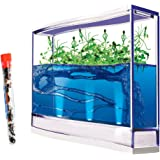 GIANT Live Lighted Ecosystem Gel Ant Habitat Shipped with 25 Live Ants Now (1 Tube of Ants) - Lights Up -3 Times larger than Regular Size