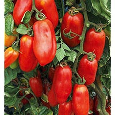 San Marzano Redorta Tomato Seeds - heirloom variety from Tuscany, Italy. !!!(100 - Seeds) : Garden & Outdoor