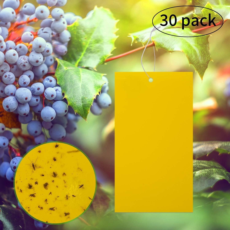 LUTER 30 Pack Trampas pegajosas Amarillas de Doble Cara para Insectos voladores como Hongos Mosquitos, áfidos voladores, Moscas Blancas, mineros de Hojas, Otros Insectos voladores