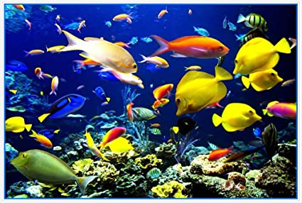 Ocean Scene With Tropical Fish Coral