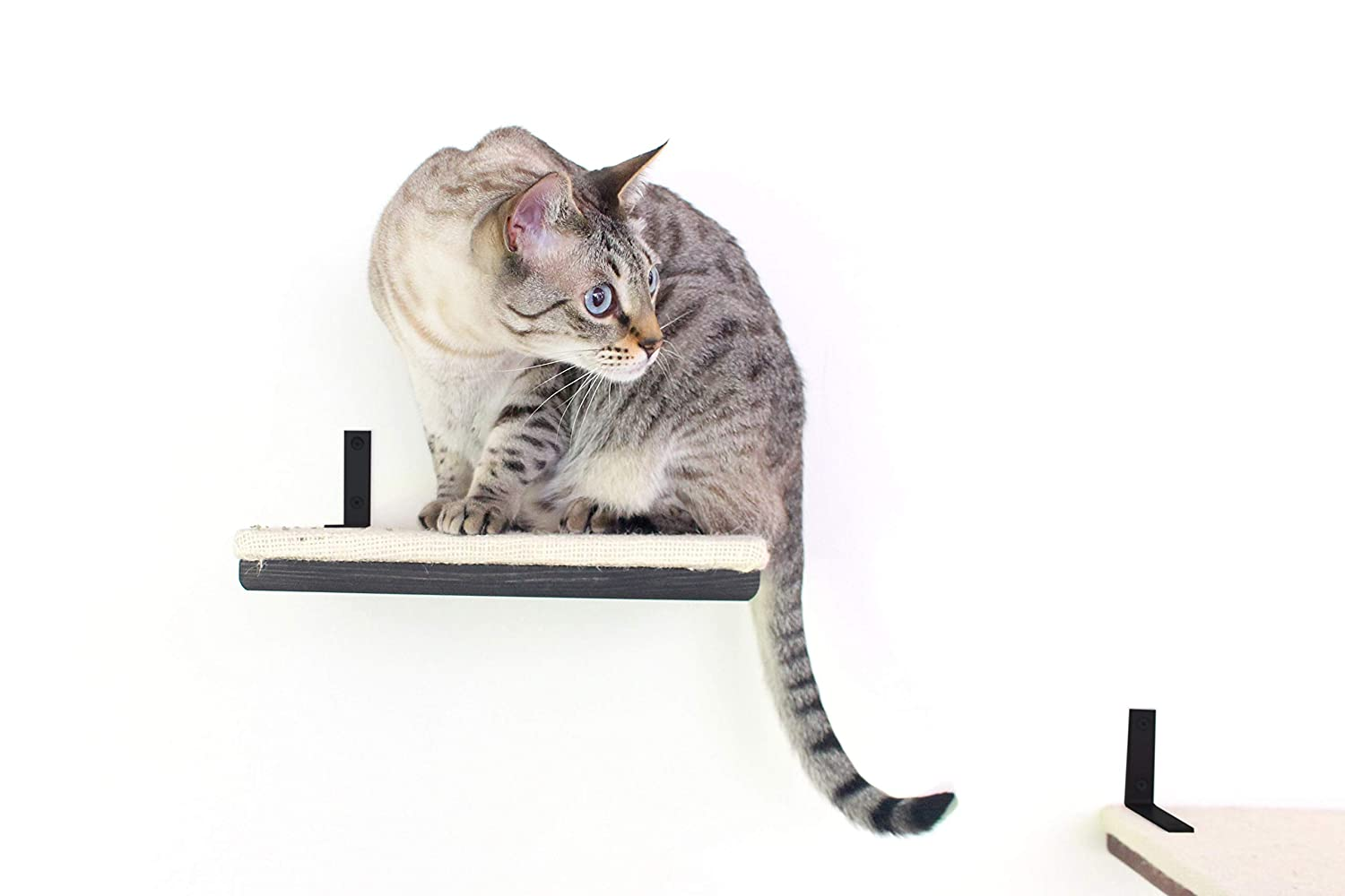CatastrophiCreations 12 Shelf with Burlap Fabric - Handcrafted Wall-mounted Cat Furniture