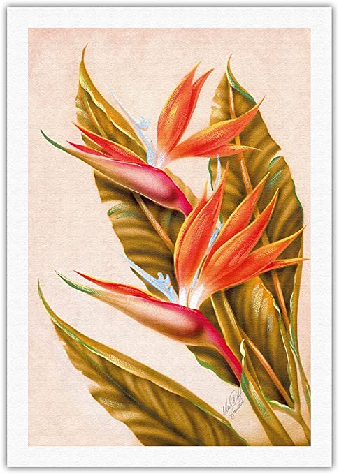 Bird of Paradise Ted Mundorff 1940s Vintage Hawaiian Airbrush Art Fine Art Print
