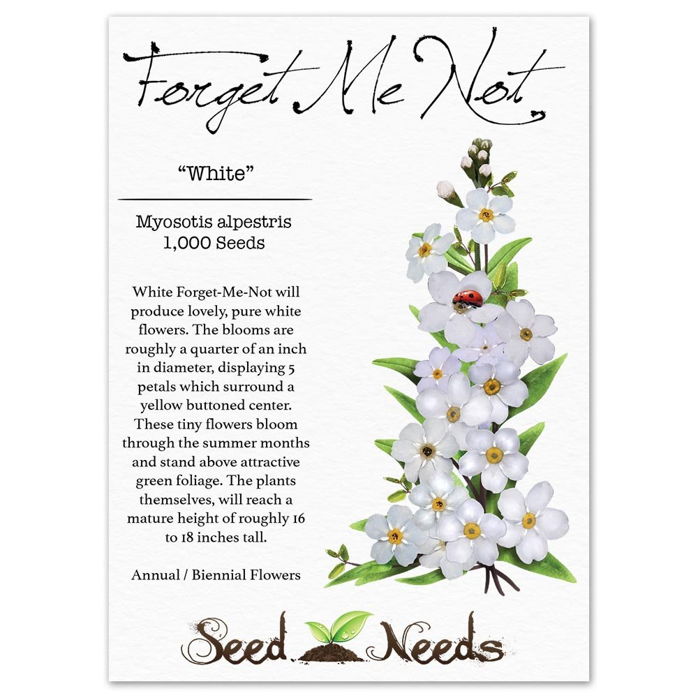 Amazon Package Of 1 000 Seeds White Forget Me Not Myosotis