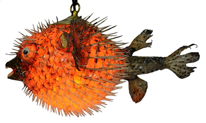 eab4f486e Genuine Spiny Blowfish Pufferfish Light   Large 15