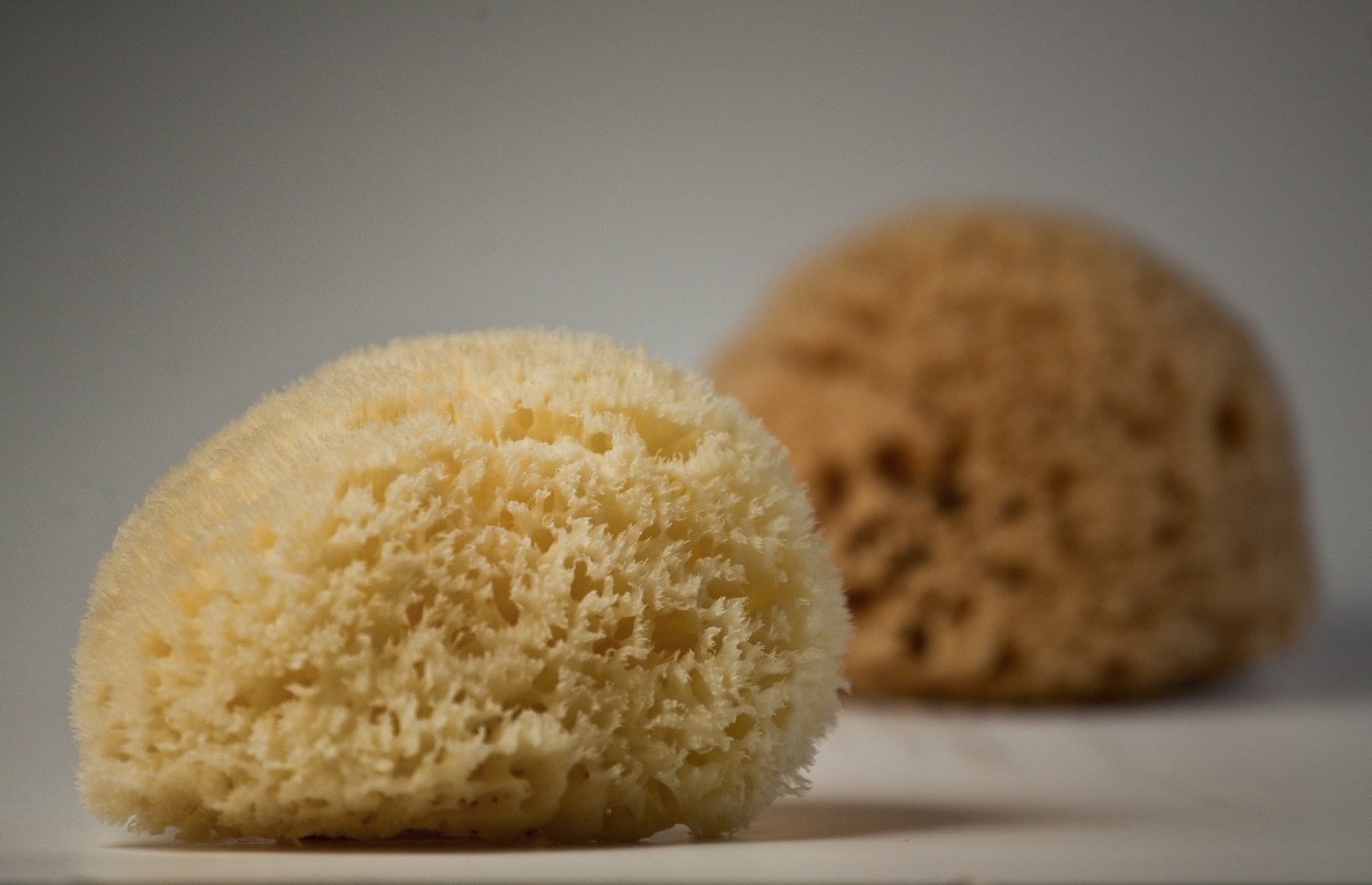 King of Natural Sea Sponges by Poseidon Sponge| Honeycomb| All sizes (5.5''-6'')