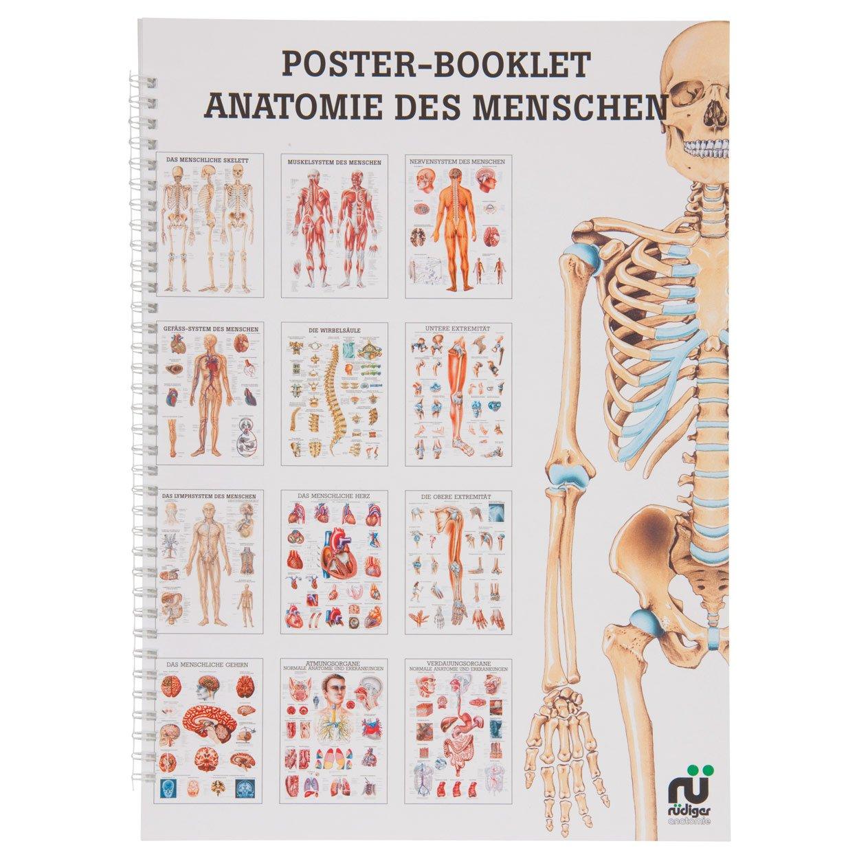 Anatomie des Menschen Mini-Poster Booklet Anatomie 34x24 cm, 12 ...