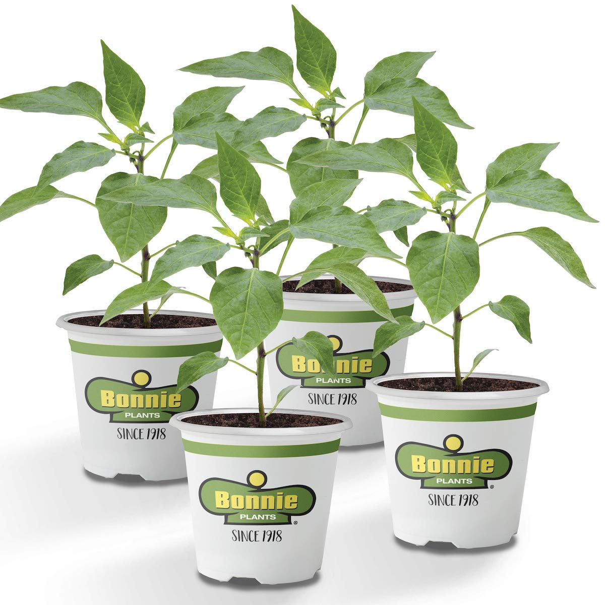 Bonnie Plants Bonnie's Green Bell Pepper Live Vegetable Plants - 4 Pack | Non-GMO | 2 - 3 Ft Plants | 4.5 x 4 Inch Pepper Size by Bonnie Plants (Image #1)