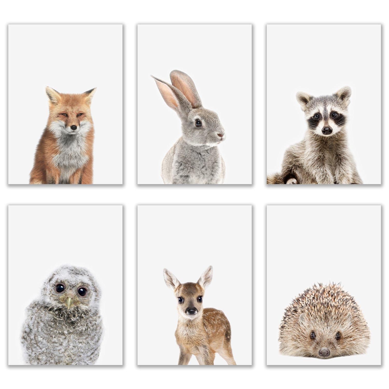 Crystal Baby Woodland Animals Poster Prints - Set of 6 (5x7) Adorable Furry North American Portraits Wall Art Nursery Decor - Owl - Deer - Bunny - Raccoon - Hedgehog - Fox