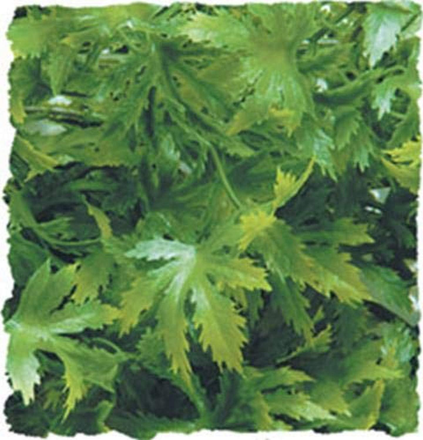 ZOO MED NATURAL BUSH CANNABIS SMALL DECORATION FREE SHIPPING TO THE USA