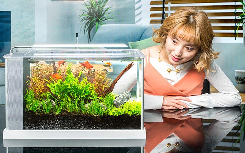 Jiangu acuario, filtro silencioso, acuario de cristal, mini pecera, acuario casero: Amazon.es: Productos para mascotas