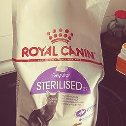 Royal Canin C-58467 Sterilised - 4 Kg: Amazon.es: Productos para ...