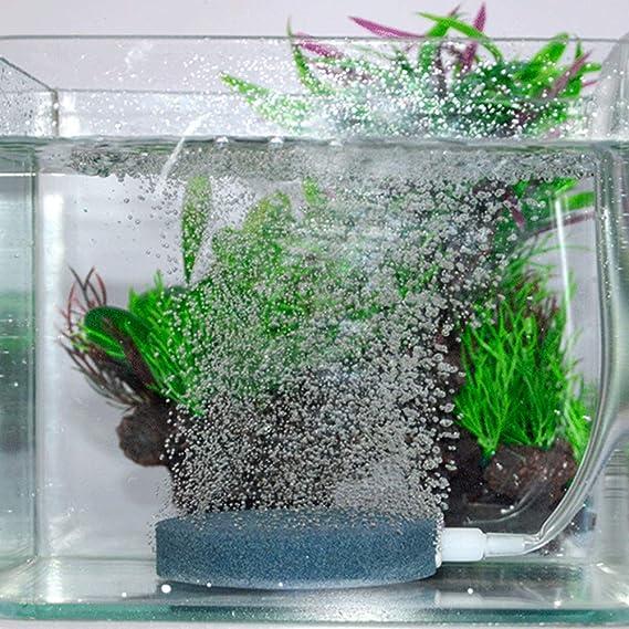 Beito 1PC Acuario Piedra Aire 6cm Disco Burbuja Piedra Bomba de Aire Stone Fish Tanque de oxígeno del Aire del difusor de Piedra: Amazon.es: Productos para ...