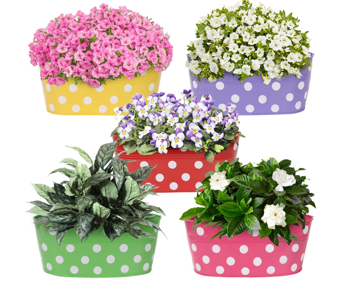 Amazon Brand - Solimo Rust-Free Hanging Planter - Set of 5 (Oval - Red, Green, Yellow, Pink, Purple) product image