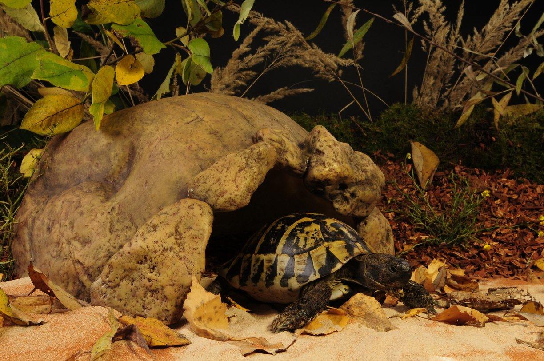 Exo Terra PT2922 Tortoise Cave by Exo Terra