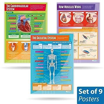 Set von 9 aufgetragen Anatomie und Physiologie Poster | Physische ...