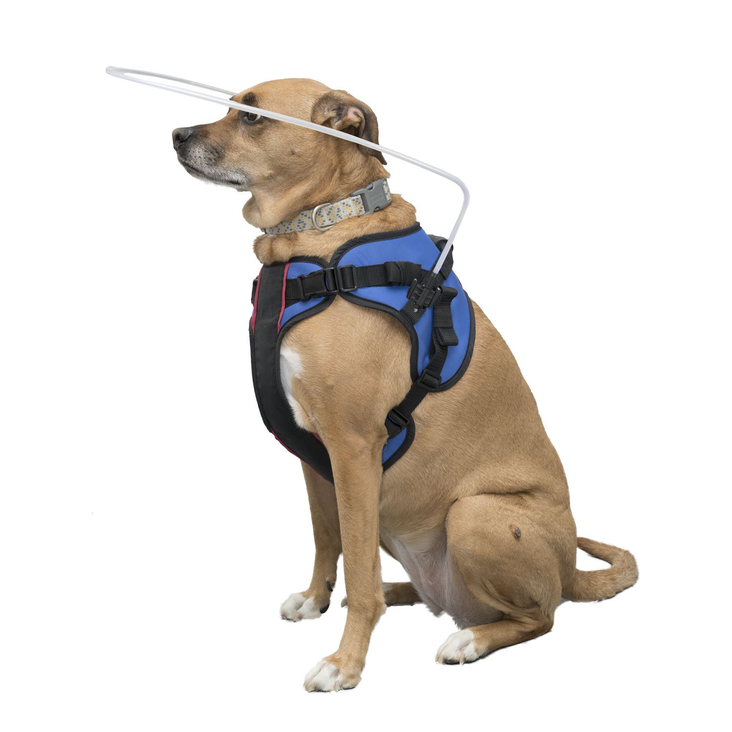 Walkin' Blind Dog Halo Harness for Pets Over 30 lbs by Walkin'