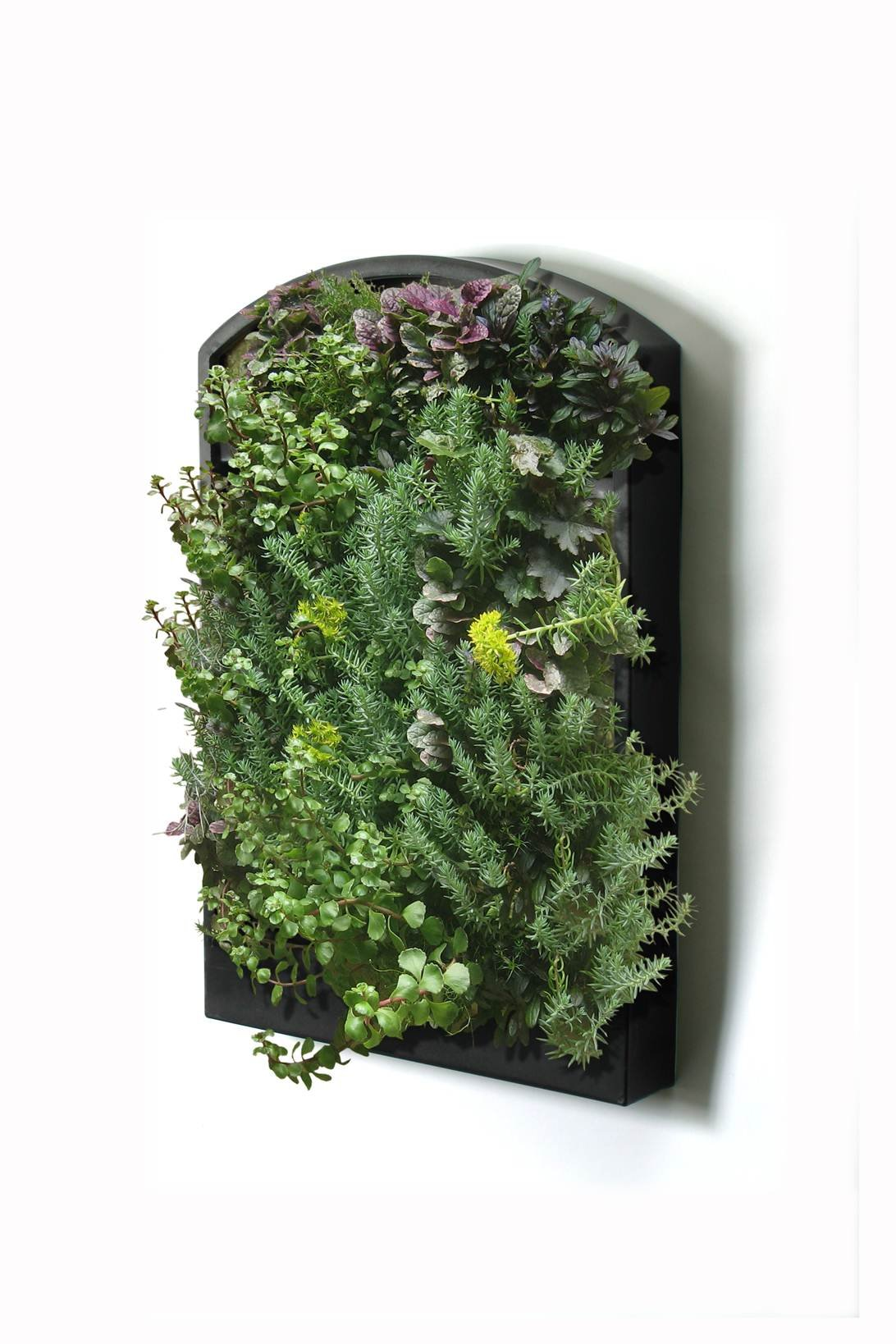 Algreen Greenwall Vertical Planting System with Automated Watering System