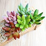 Dutch Brook 5Pcs Different Succulents Artificial Cactus Plants for Office Home Garden Decor (Sent Randomly) (5 Pcs)