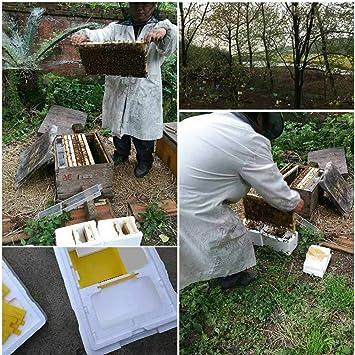 Zerodis Harvest Bee Hive Box Beekeeping King Box Pollination Box Beekeeping Tool