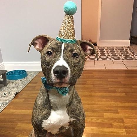 FURU Corona y Lazo Corbata Sombrero para Perro Gato Cachorro ...