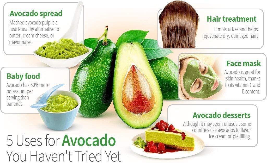 AvoSeedo Sch/üssel-Set zum Anbau Ihres eigenen Avocadobaums Gr/ün und Gr/ün immergr/ün perfektes Avocado-Baum-Wachstums-Set f/ür jeden Avocado-Liebhaber mit Plan-Topf Mehrfarbig