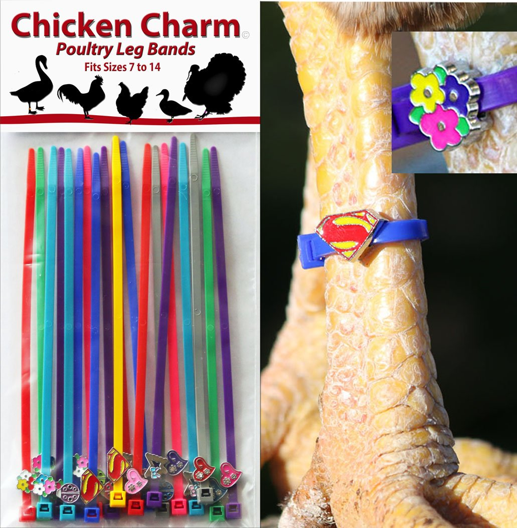 Chicken Charm Poultry Leg Bands - Fit Sizes 7 To 14 10