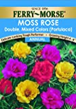 Ferry-Morse Moss Rose Double Mixed Colors Seeds (Annual)