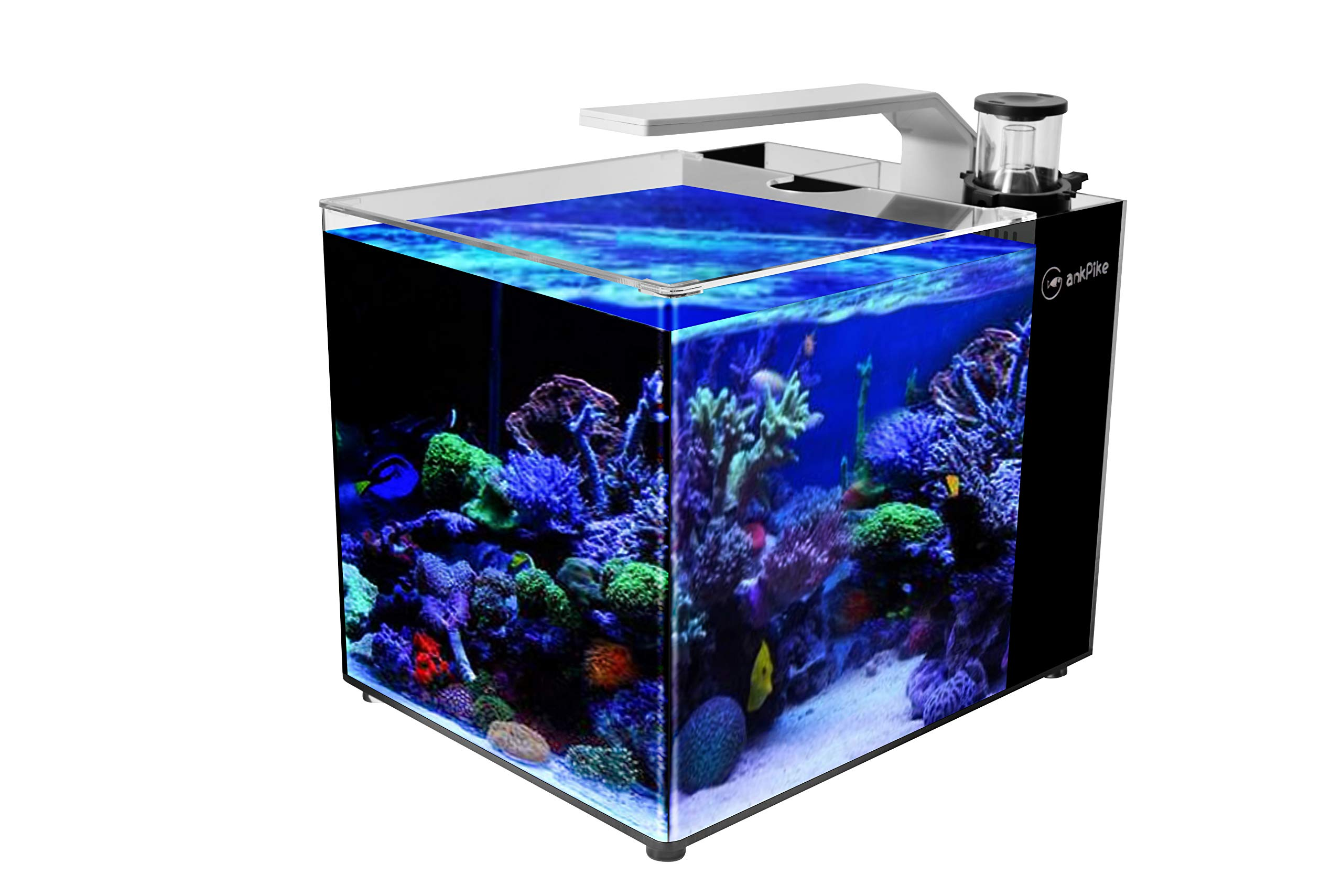 GankPike 6-Gallon Saltwater Aquarium Marine Fish Tank Reef Tank with Lid, Protein Skimmer, Heater, LCD Digital Thermometer and Pump