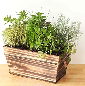 Herb Planter: Amazon.co.uk: Garden & Outdoors on planters for herbs and spices, planters for terraces, planters for growing herbs, planters for vertical gardening, planters for home, planters for winter, planters for annuals, planters for trees, planters for roses, planters for rhubarb, planters for kitchen, planters for landscaping, planters for wildflowers, planters for pots, planters for transplanting, planters for lavender,