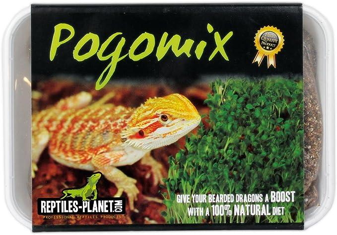 Reptiles Planet Sprout Seeds for Pogona Complete Kit: Amazon.es: Productos para mascotas