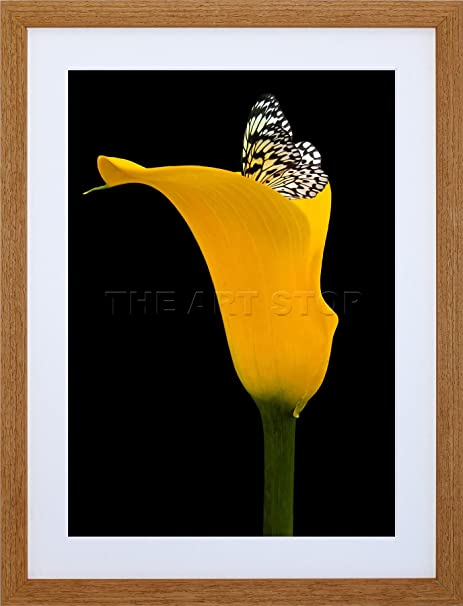 9x7 INCH YELLOW FLOWER BLACK WHITE BUTTERFLY PHOTO FRAMED WALL ART ...