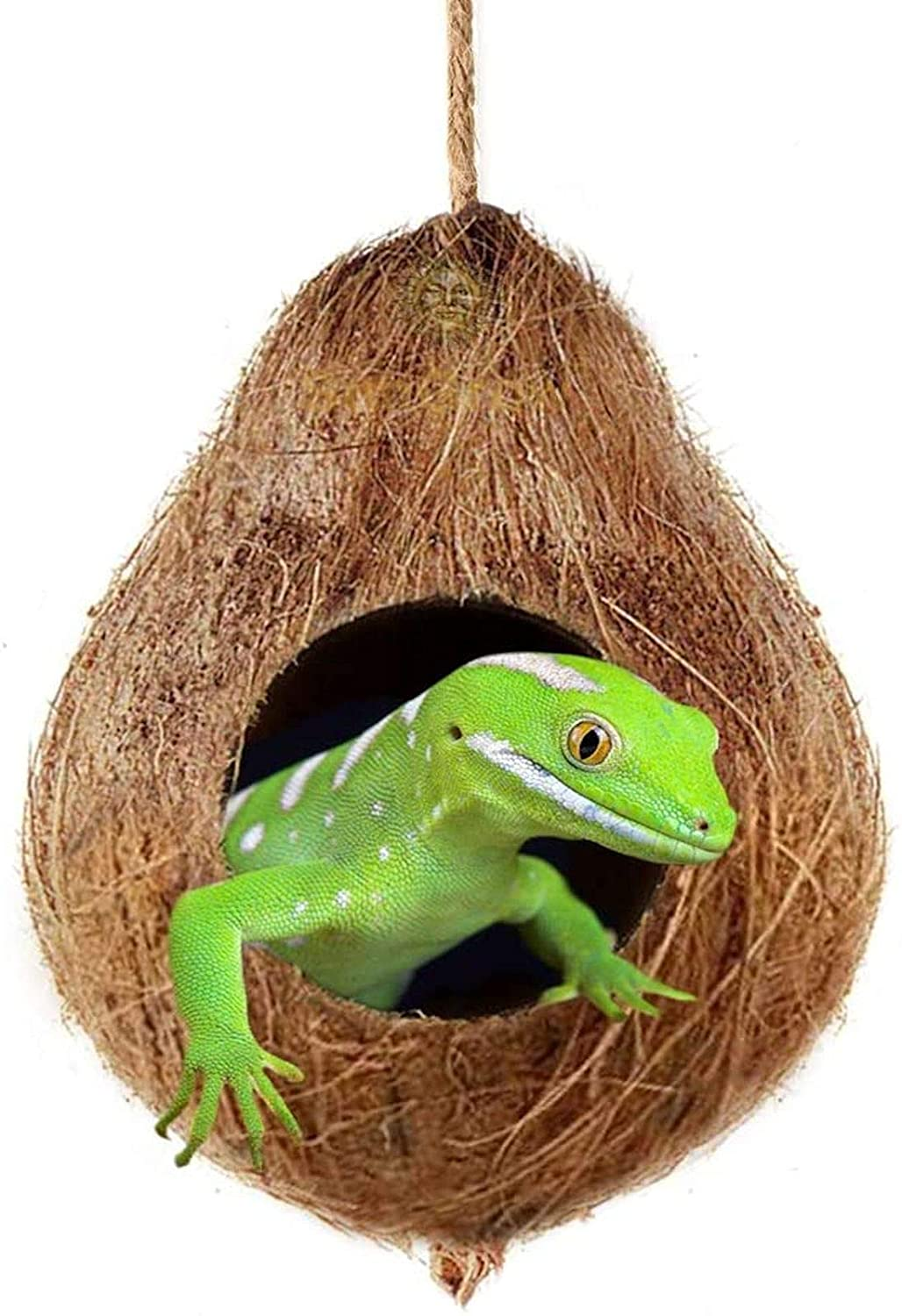 "Crested Gecko Coco Hut , Treat & Food Dispenser, Sturdy Hanging Home, Climbing Porch, Hiding, Sleeping & Breeding Pad, 4.5"" Round Coconut Shell with 2.5"" Opening, Ideal for Reptiles, Amphibians"