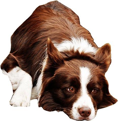 NUEVO Border Collie Perro Cuello – Tamaño Grande – 40 cm a 50 cm ...