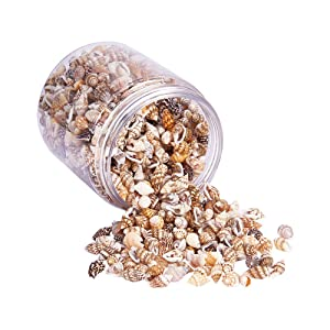 PandaHall Elite About 1400-1500 Pcs Tiny Sea Shell Ocean Beach Spiral Seashells Craft Charms Length 7-12mm for Candle Making, Home Decoration, Beach Theme Party Wedding Decor, Fish Tank Vase Filler