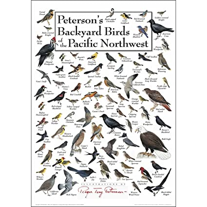 Earth Sky U0026 Water Poster   Petersonu0027s Backyard Birds Of The Pacific  Northwest