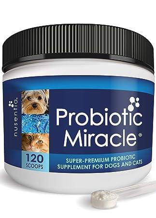 Nusentia Probiotics Los probióticos para Mascotas - Veterinaria Fórmula Completa Canina y Felina para la Salud intestinal - Probiótico en Polvo ...