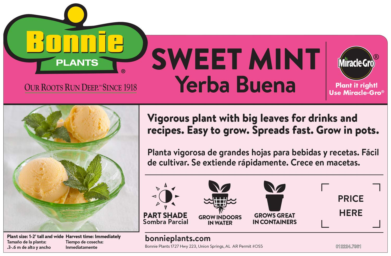 Bonnie Plants Sweet Mint Live Edible Aromatic Herb Plant - 4 Pack, Easy To Grow, Non-GMO, Perennial In Zones 5 to 11, Used In Teas & Other Beverages, Salads, Garnish, Jelly & Desserts by Bonnie Plants (Image #3)