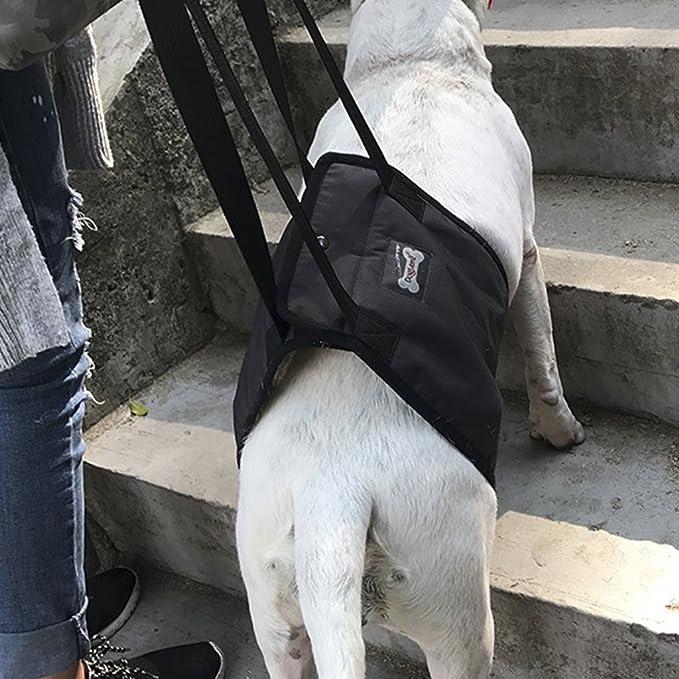 RUIXIB - Arnés para Perros, Ayuda para Levantar, arnés de ...