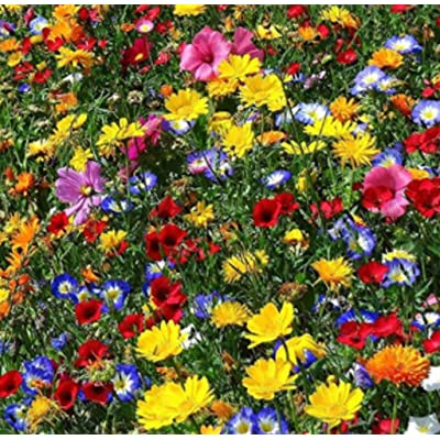 Seed House-KOUYE Wildflowers' Mix 'Butterflies and Bees' Perennial Flower Mix - Flower Meadow, Rare Wildflower Seeds Hardy Wildflowers & Herbs Mix : Garden & Outdoor