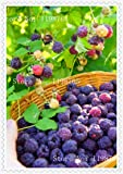 200 semi di lampone colori misti rari semi friut Super Big giganti, deliziosi semi di frutta per vasi da fiori fioriere
