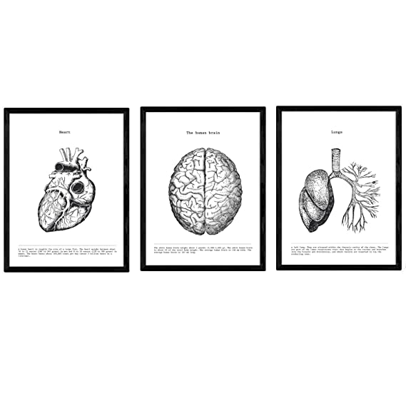 Pack de Posters de anatomía. Brazo Espalda Pierna. Cuerpo Humano ...