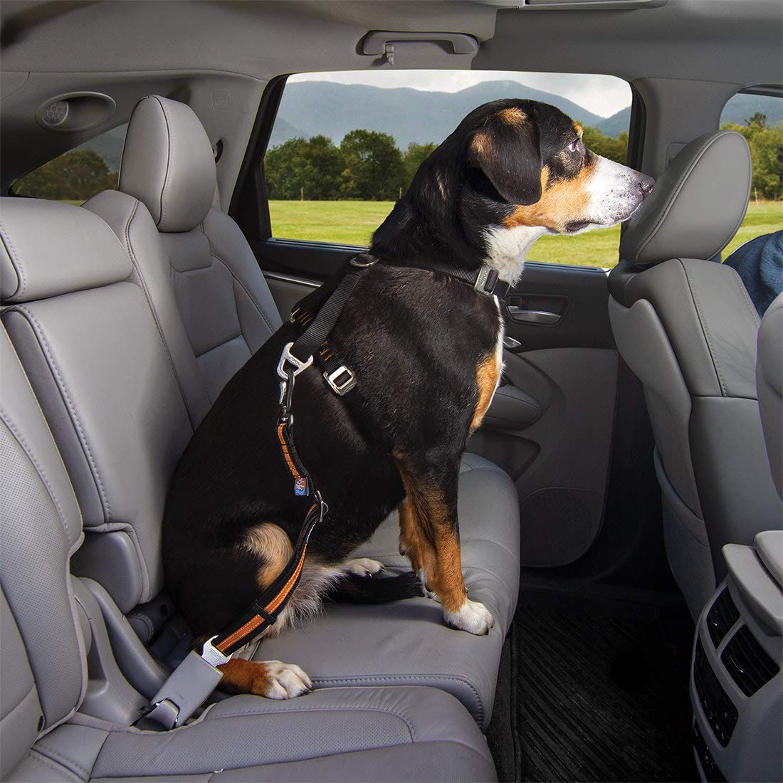 Compatible with any Pet Harness Zipline Kurgo Seatbelt Tether for Dogs Universal Car Seat Belt for Pets Carabiner Attachment| Easy Installation Adjustable Length Dog Safety Belt Swivel Clip