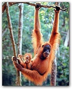 Orangutan and Baby Waving Monkey Kids Room Nursery Wall Decor Art Print Poster (16x20)