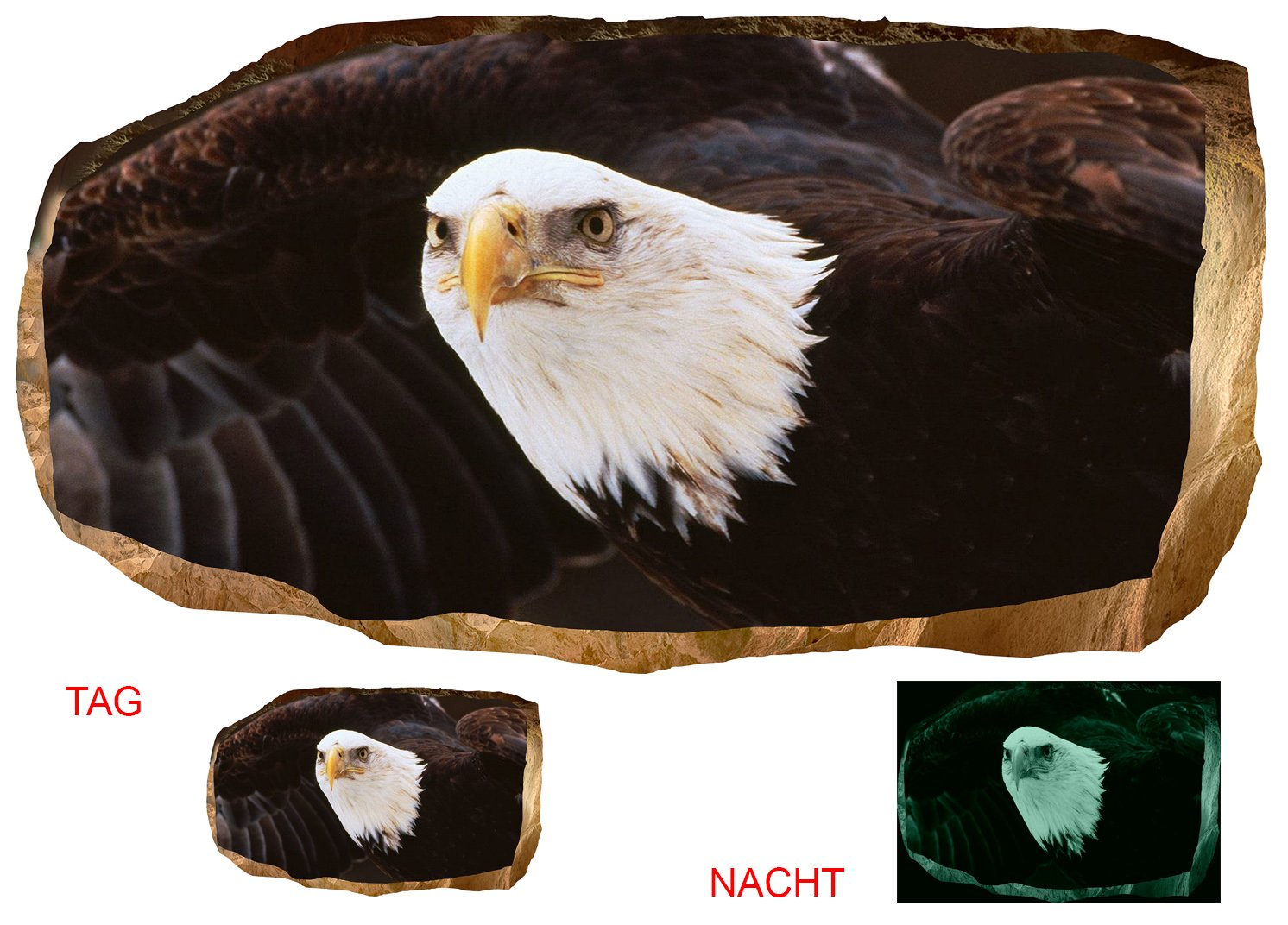 Startonight 3D Mural Wall Art Photo Decor American Eagle II Amazing Dual View Surprise Large Wall Mural Wallpaper for Living or Bedroom Room America Wall Art 120 x 220 cm by Mural Wall Art