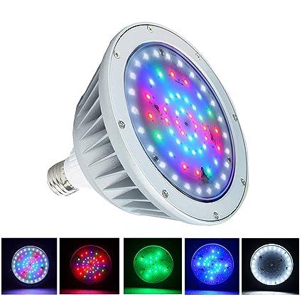 Amazon.com : WYZM LED Pool Light Bulb 40w for Inground Swimming Pool ...