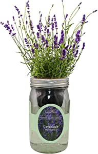 Environet Hydroponic Herb Growing Kit, Self-Watering Mason Jar Herb Garden Starter Kit Indoor, Grow Your Own Herbs from Seeds (Lavender Munstead)
