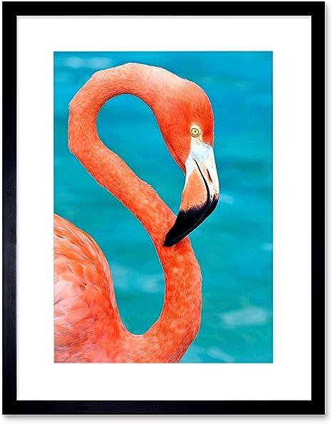 Bird Photography American Flamingo print Home Wall Decor Office Wall Decor Flamingo Photo print Color Bird Photo print Bird Photo art