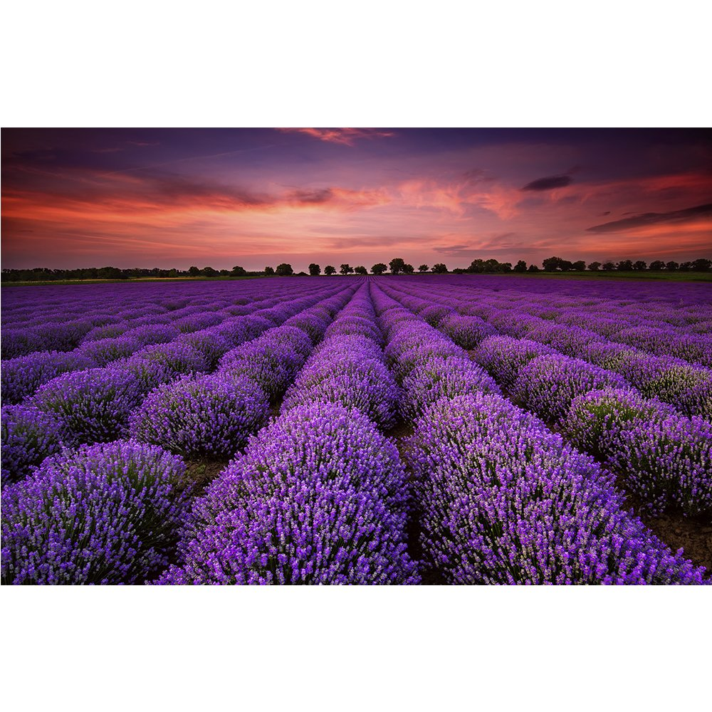 1000 Pieces Jigsaw Puzzle for Kids Adult Man Women Teens Reduced Pressure Toy Gift - Learning and Education (1000Provence Lavender) CHengQiSM
