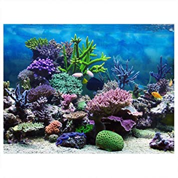 Cartel de Fondo del Acuario Cartel de Tanque de Peces Adhesivo de PVC Arrecife de Coral Bajo Agua Papel de Decoración Calcomanías Adhesivas Socialme-EU(61 ...